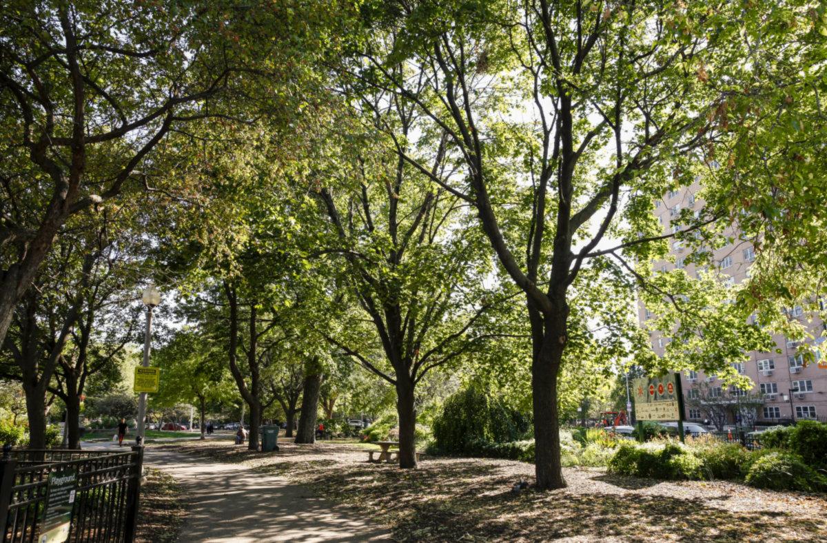 Albany Park photo